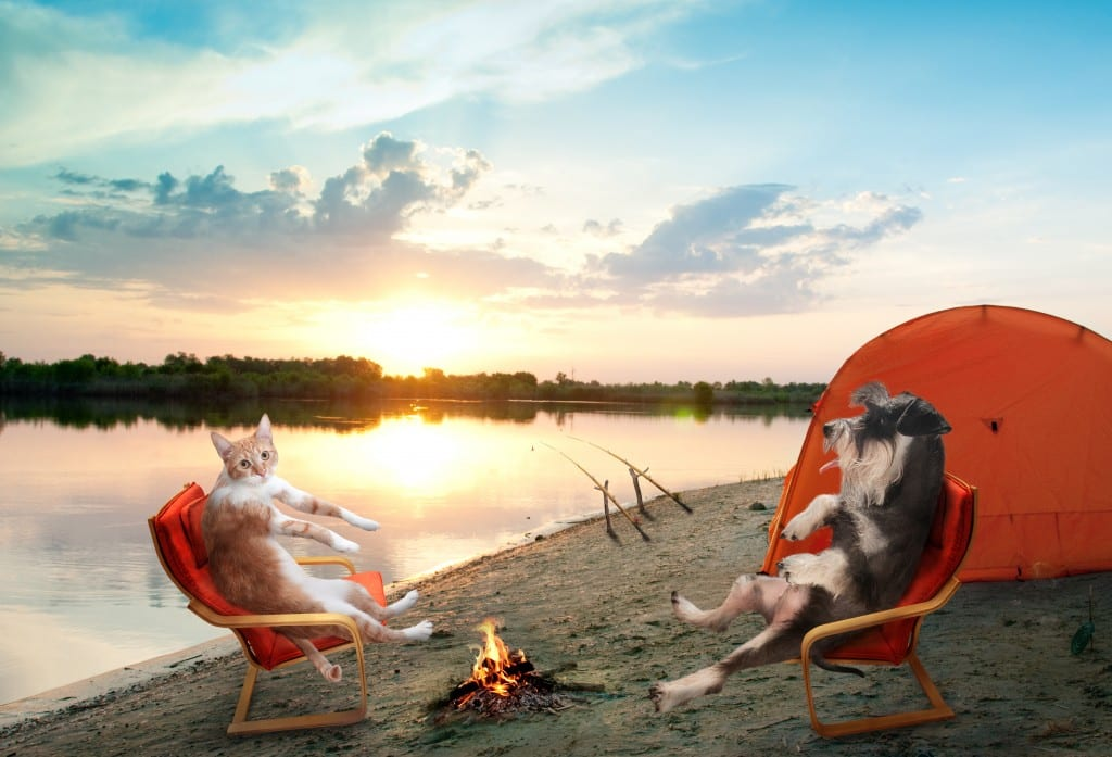 camping with pets 1