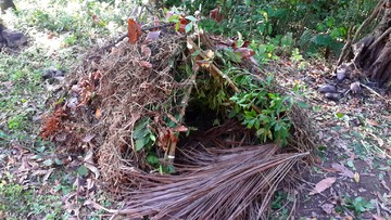 Build a simple shelter