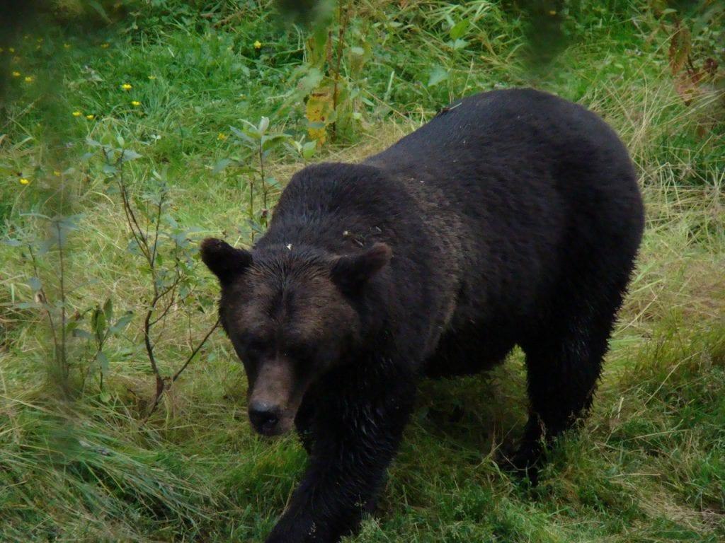 bear spray 1