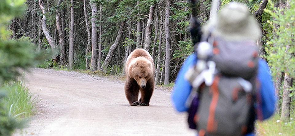 Avoiding Bear Problems 3