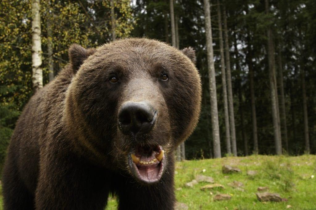 Avoiding Bear Problems 4