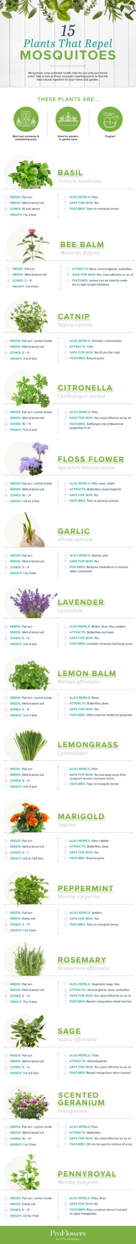 list of plants that repel mosquitoes